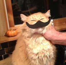 Kitten halloween 006